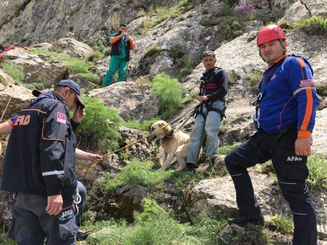 7 gündür dağda mahsur kalan çoban köpeği Pulsar kurtarıldı