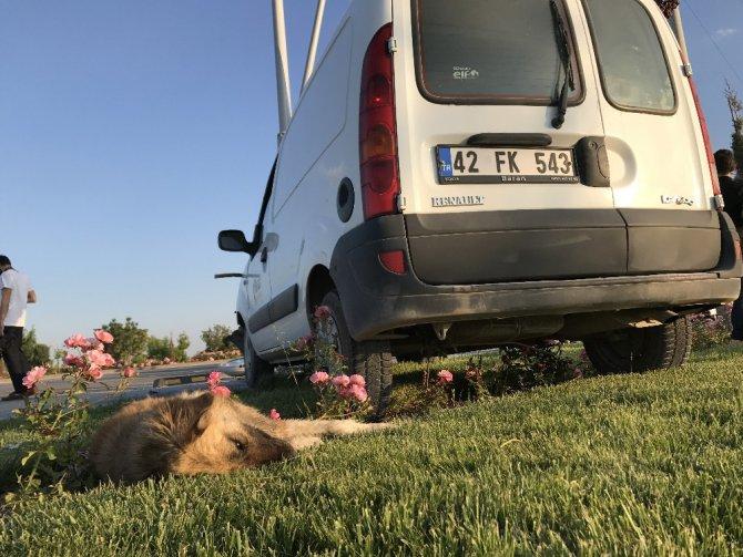 Önce köpeğe sonra direğe çarpan aracın sürücüsü yaralandı