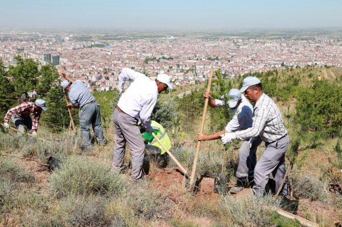Kılıçaslan Tepesi'ne 7 bin 500 karaçam