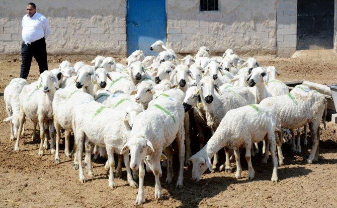 Genç çiftçi projesi şehirden köye göç ettirdi