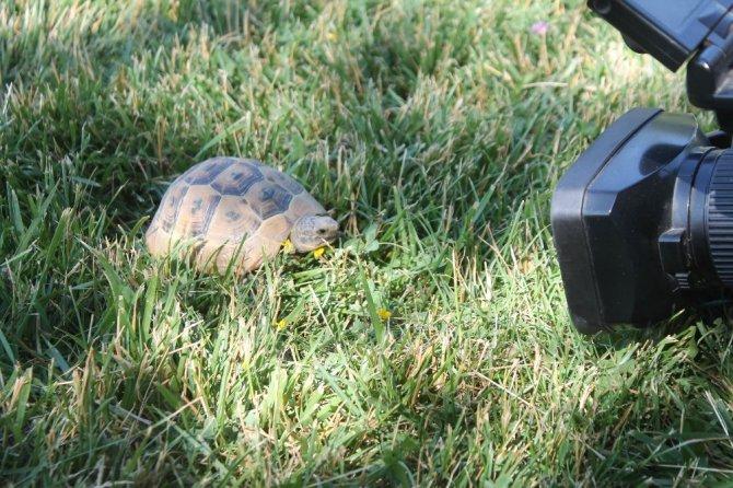 Kaplumbağalar parkı mesken tuttu