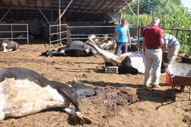 Konya'da besihanedeki 19 büyükbaş hayvan telef olmuş halde bulundu