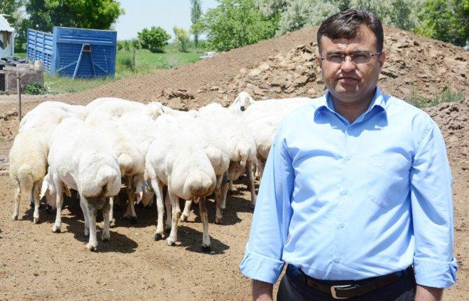 """Aktürk: """"Türkiye'nin et açığını küçükbaş hayvancılık kapatır"""""""