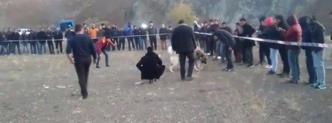 Bahisle köpek dövüşüne jandarma baskını