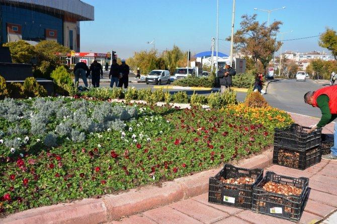 Aksaray Belediyesi kışlık çiçek ekiyor