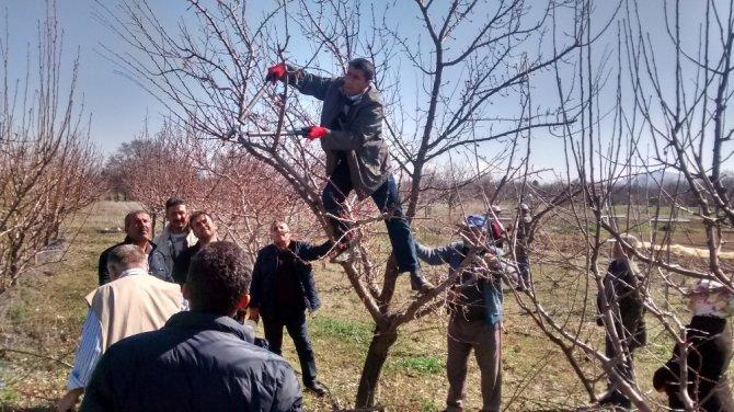 Beyşehir'de meyve üreticisine uygulamalı budama eğitimi