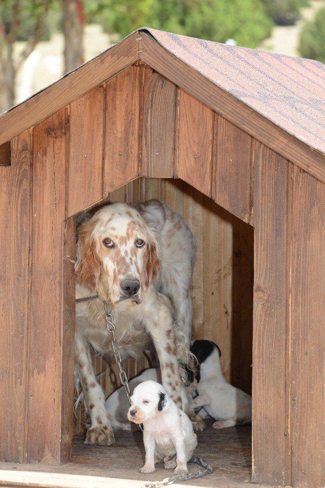 Türkiye'nin en modern hayvan barınaklarından biri Konya'da