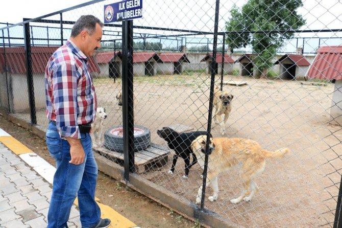 Aksaray'da hayvanlar 5 yıldızlı otelde