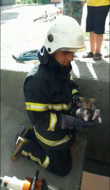 Mazgalda mahsur kalan yavru kedileri itfaiye kurtardı