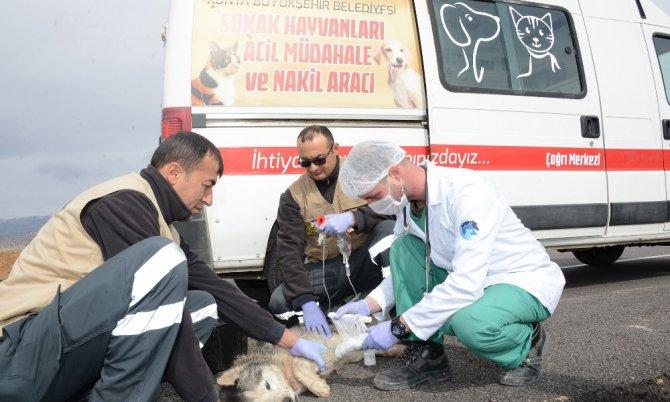 Konya'da hayvanlar için örnek projeler