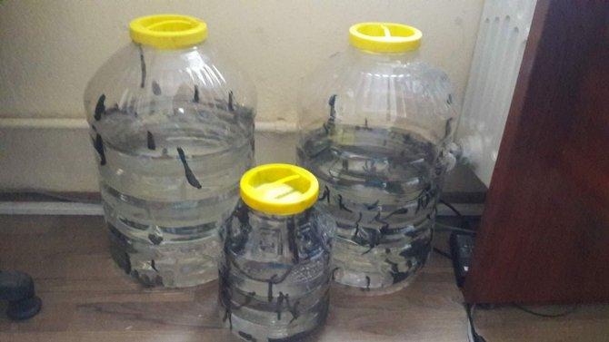 Konya'da yasa dışı sülük satısına 3 bin 966 lira ceza