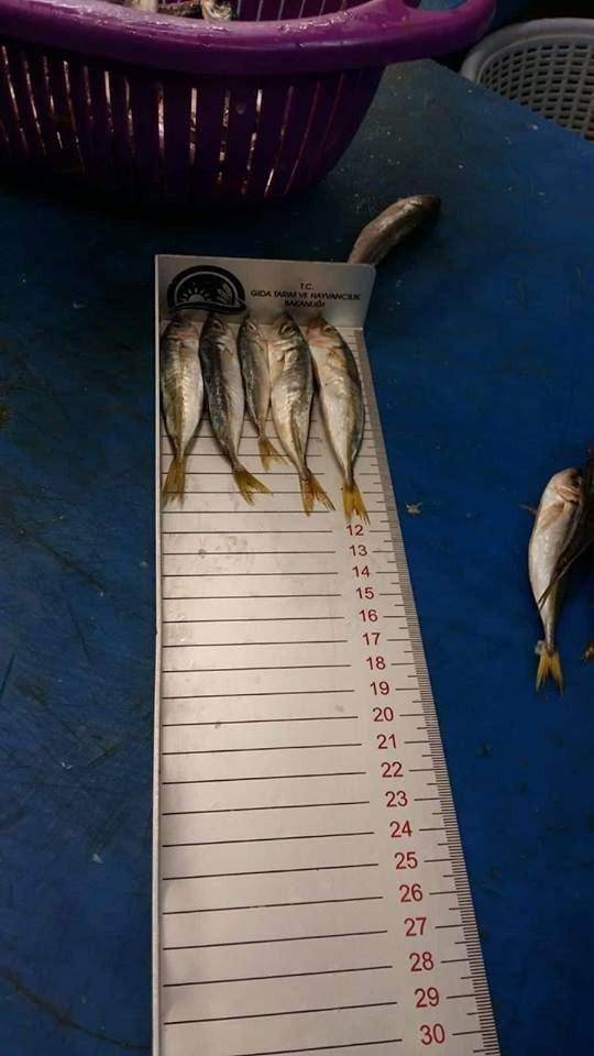 Konya'da balık boy limitine uymayanlara 42 bin lira ceza