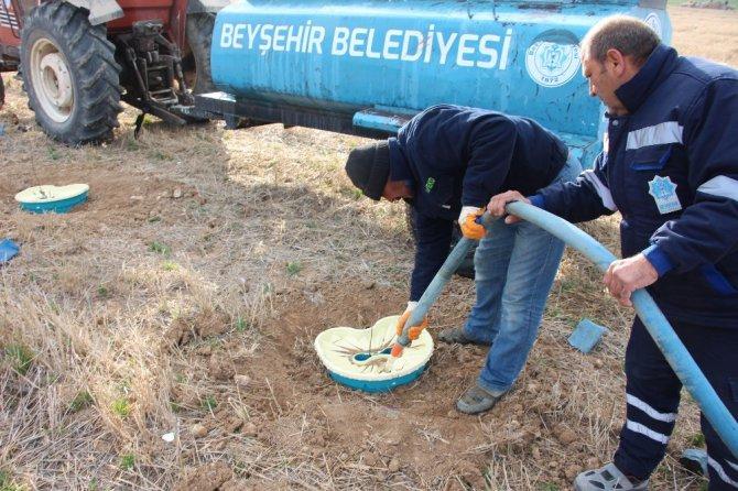 Beyşehir Belediyesi, ceviz ve fındık bahçesi oluşturuyor