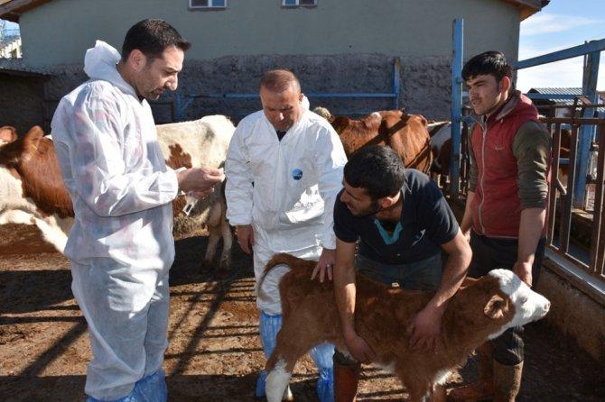 Aksaray'da üreticiler hayvan hastalıkları konusunda bilgilendirildi