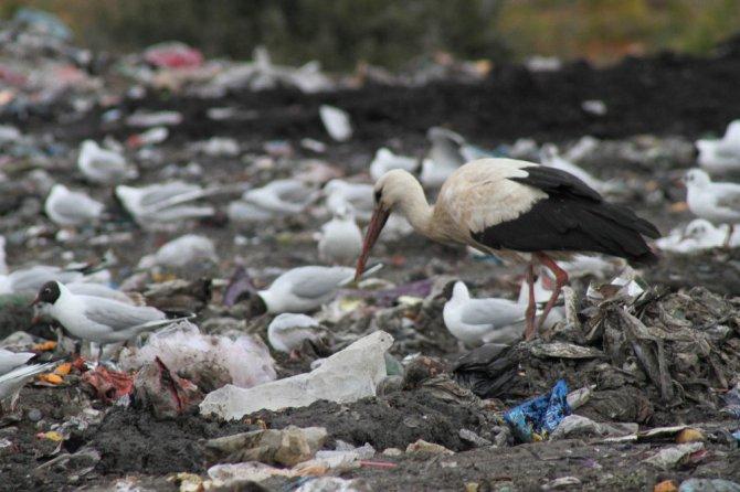 Kuş sürücüleri ve sokak hayvanlarının çöplüğü mesken tuttu