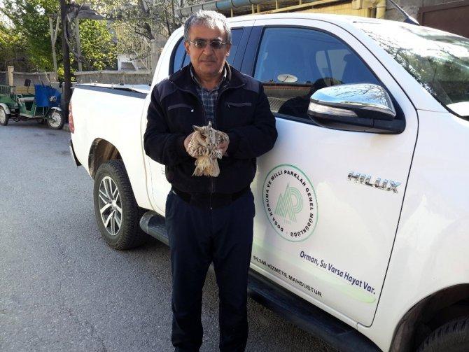 Konya'da tepeli baykuş tedaviye alındı