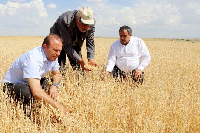 Aksaray'da tarım arazilerini dolu vurdu