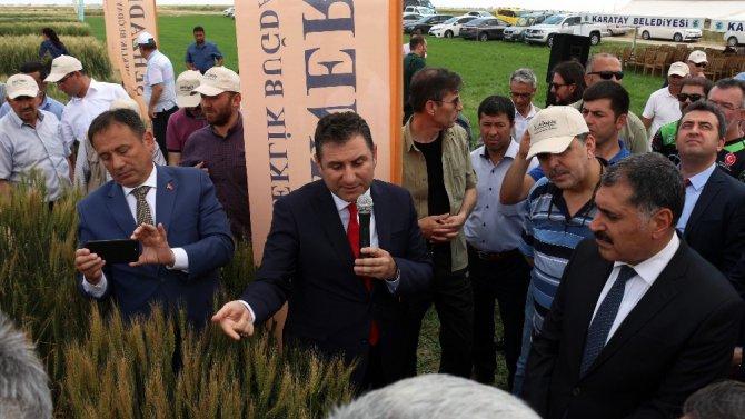 Konya'da Tarla Günü etkinliğinde buğday çeşitleri tanıtıldı