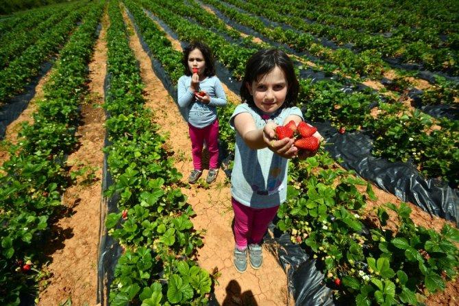 Konya'da 2020 Yılı Tarımsal Destekleme başvuruları başladı