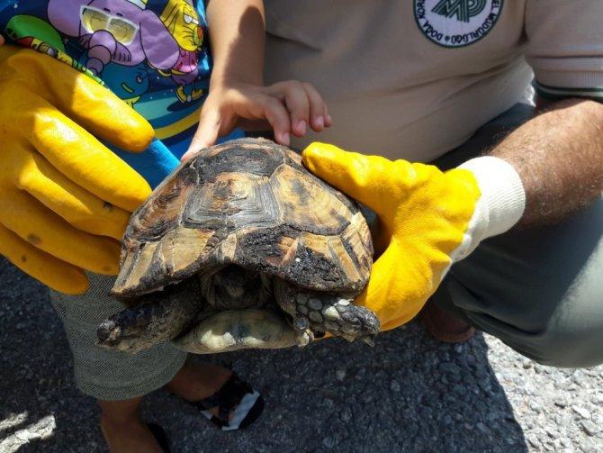 Çocuklar kaplumbağayı yanmaktan kurtardı