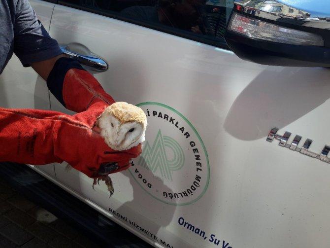 Yaralı peçeli baykuş tedaviye alındı