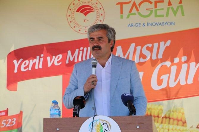 Konya'da 6 çeşit yerli mısır tohumu çiftçiye tanıtıldı