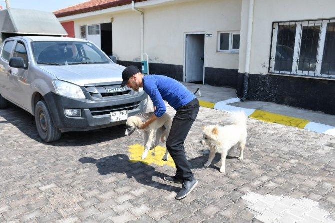 Aksaray Belediyesi sahipsiz hayvanları koruyup tedavilerini yapıyor