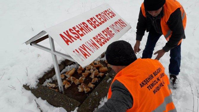 Akşehir Belediyesi sokak hayvanlarını beslemeyi Sürdürüyor