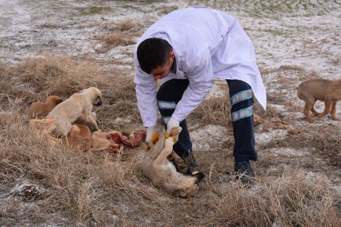 Ölüme terk edilen köpeklere Aksaray Belediyesi sahip çıktı