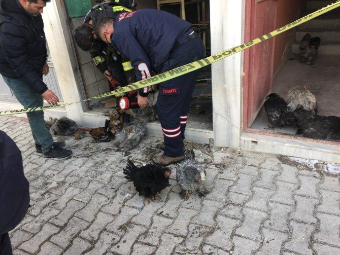 Bodrum yangınında tavuklar telef oldu