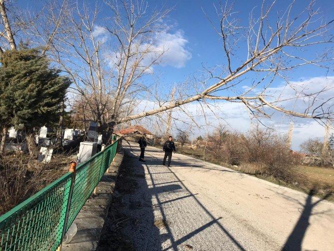 Şiddetli rüzgar direk ve ağaları devirdi