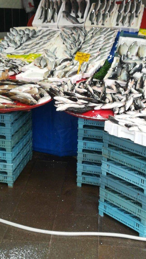 Üreme dönemindeki balıkların satışına 30 bin lira ceza