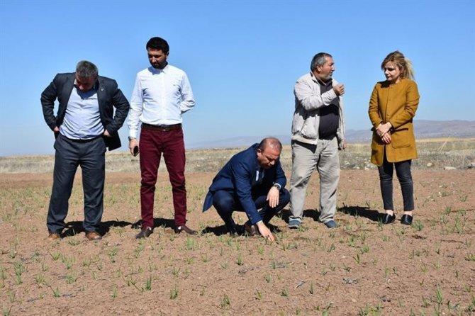 Tarım ve Orman müdürlüğü ekili tarım arazilerinde incelemelerde bulundu