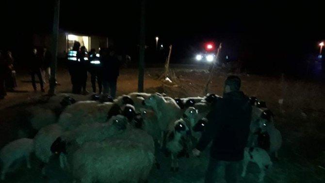 Konya'da kayıp koyunları jandarma bulup sahibine teslim etti