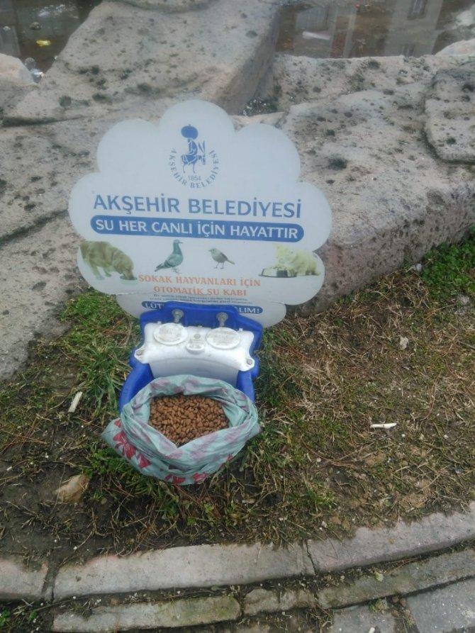 Akşehir'de sokak hayvanları unutulmuyor