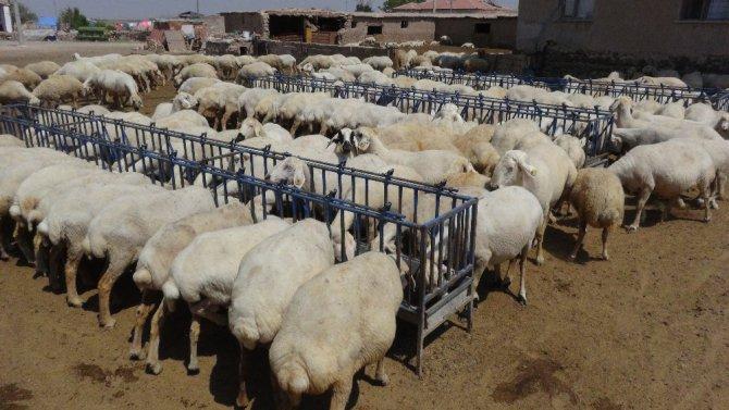 Korona virüs fırsatçılarının yem fiyatlarında yaptığı fahiş artışa tepki