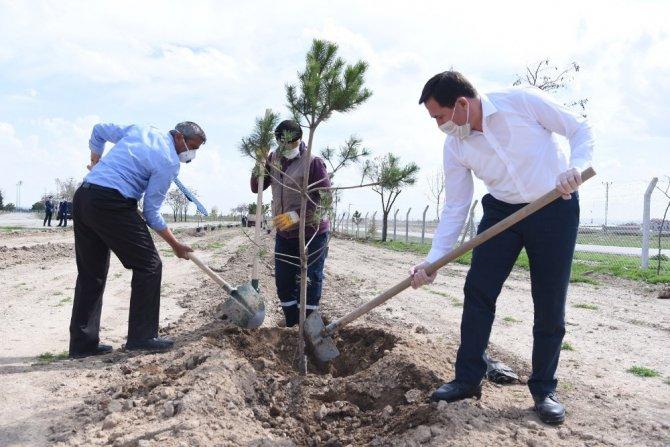 """Başkan Hasan Kılca: """"Korona ağaç sevgimizi engelleyemez"""""""