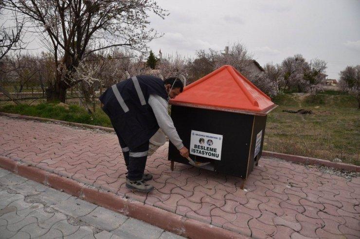 Selçuklu Belediyesi sokak hayvanlarını unutmadı