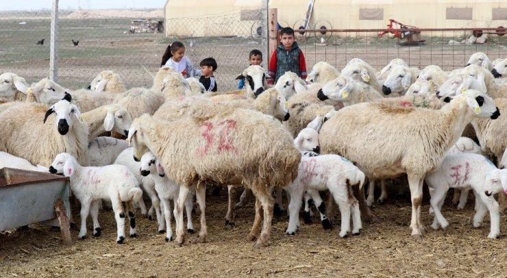 Türkiye'de 53 milyon hayvan üreticisine 1 milyar 100 milyon destek ödemesi