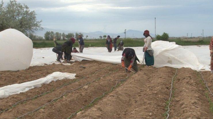 Konya'da tarlalarda çapa mesaisi başladı