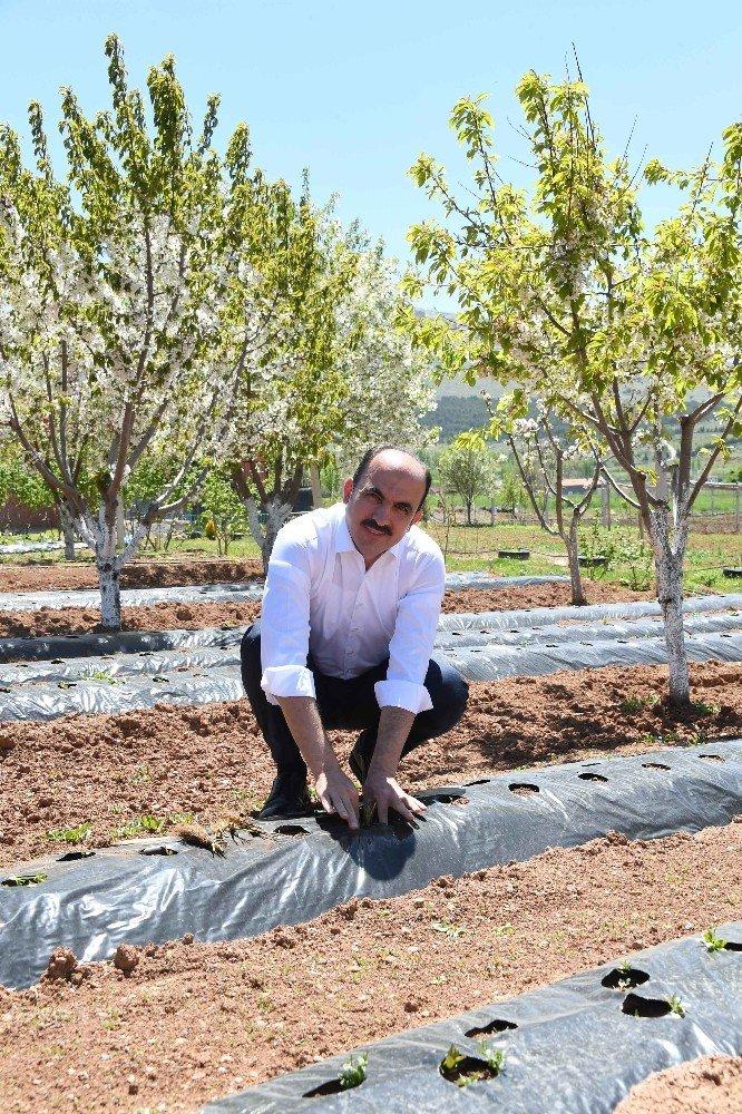 """Başkan Altay: """"Tarımsal üretim stratejik öneme sahip"""""""