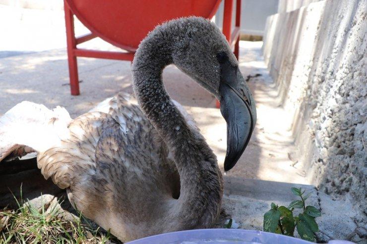 Yaralı flamingoyu polis memurları elleriyle besledi