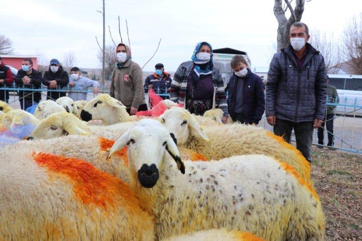 Kazada koyunları telef olan Şerife anne koyunlarına kavuştu