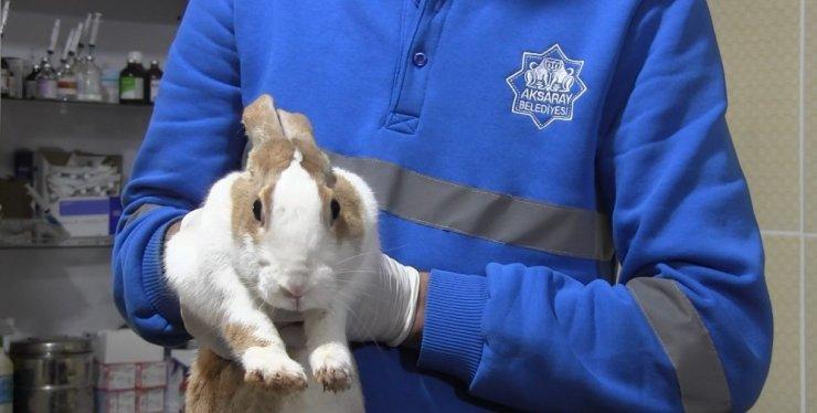 Yaralı tavşan tedavi altına alındı