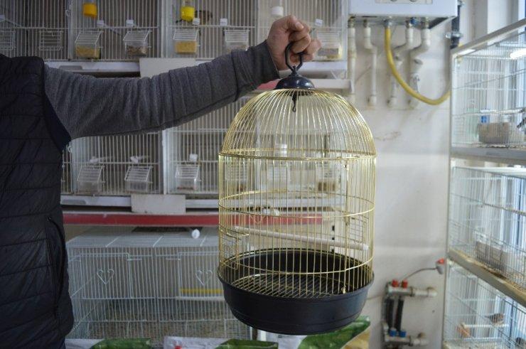 Petshoplarda satacak kuş kalmadı