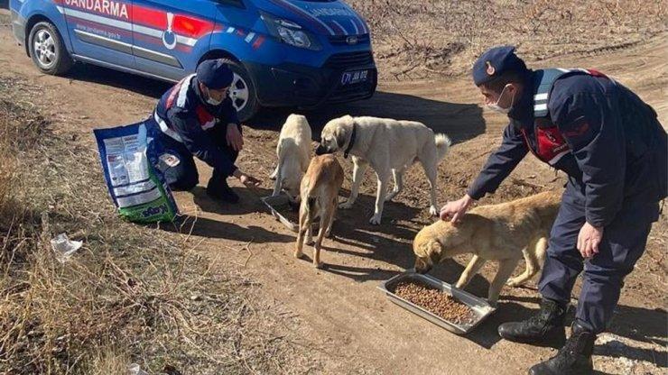 Jandarma sokak hayvanlarını elleriyle besledi