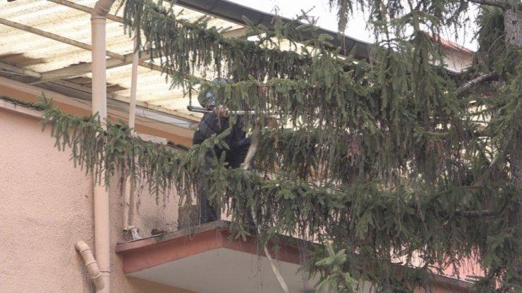 Başkent'te fırtınada devrilme ihtimali olan ağaca halatlı önlem
