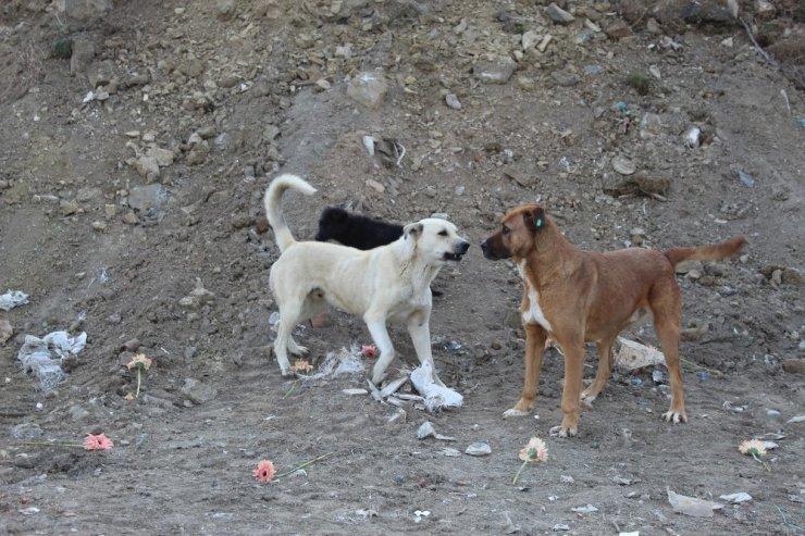 Gölbaşın'da köpeklerin katledildiği yere karanfil bırakıldı