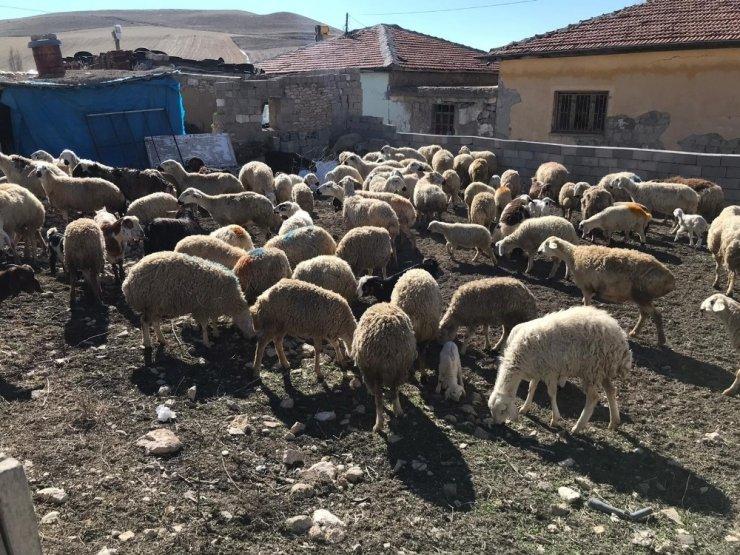 Yangında koyunları ölen çiftçiye Vali destek çıktı