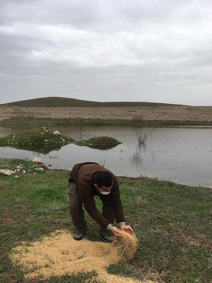 Göçmen kuşlar için yemleme çalışması yapıldı
